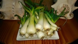 Solstice Onions